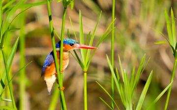 Hlosi Game Lodge Birds Of Hlosi Malachite Kingfisher