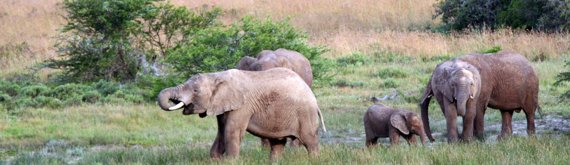 Hlosi Game Lodge Amakhala Game Reserve Eastern Cape Elephants