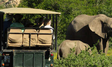 Amakhala Game Reserve Eastern Cape Elephants Safar